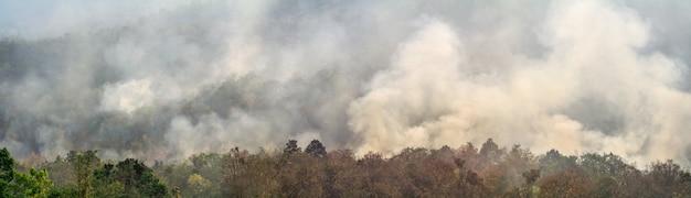 Il disastro dell'incendio nella foresta pluviale amazzonica sta bruciando a un ritmo mai visto prima.