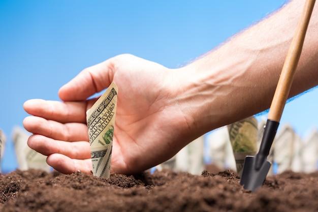 I dollari americani crescono da terra
