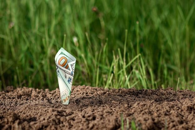 I dollari americani crescono dal terreno come piante su uno sfondo di vegetazione