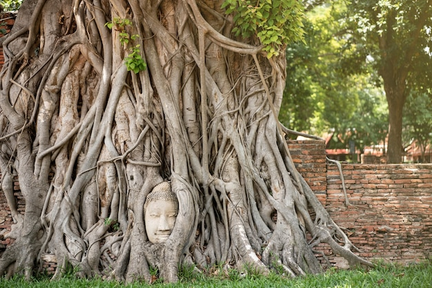Antica testa di buddha con l'albero di radici al tempio mahathat ayutthaya thailandia