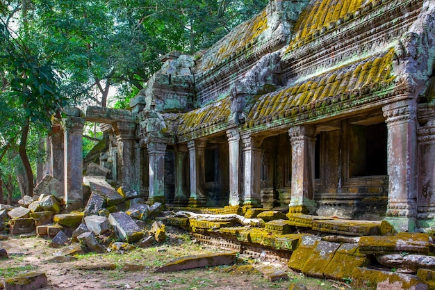Antiche rovine del tempio di ta prohm ad angkor wat, cambogia