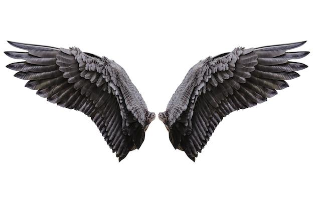 Ali d'angelo, piumaggio naturale delle ali nere