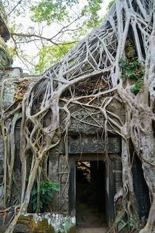 Angkor wat temple e alberi