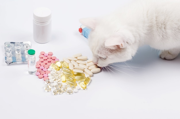 Il gatto bianco d'angora mangia una pillola concetto di trattamento per i gatti