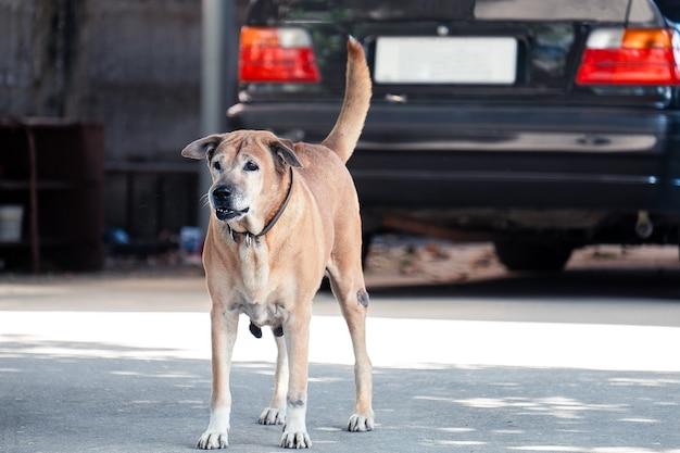 Cane arrabbiato in piedi a casa