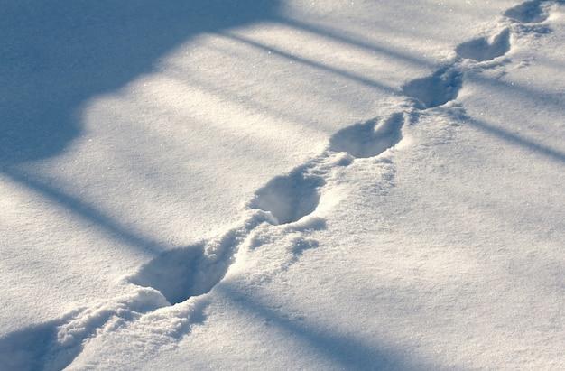 Tracce di animali nella neve a debole coesione nella luce della sera