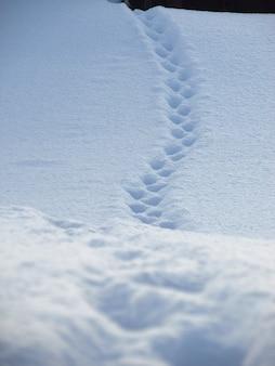 Tracce di animali nella neve la scia di un gatto su una crosta di neve in un orto al mattino presto