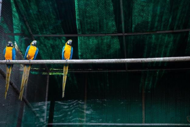 Animali nello zoo di nuova delhi, india.