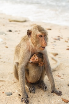 Animali e fauna selvatica. la mamma macaco trasporta una piccola scimmia cucciolo