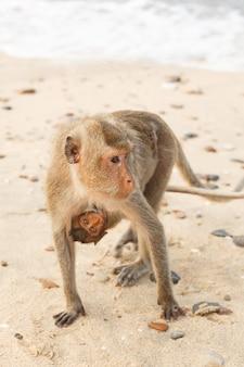 Animali e fauna selvatica. la mamma del macaco trasporta una piccola scimmia cucciolo