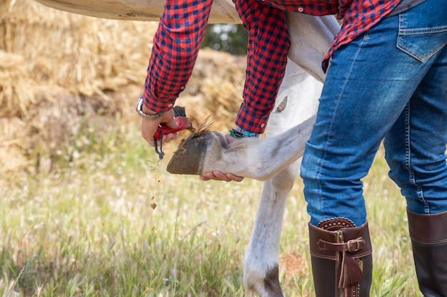 Giovane maschio anonimo in attrezzatura casuale facendo uso della spazzola per rimuovere erba e sporcizia dal ferro di cavallo del cavallo bianco in prato