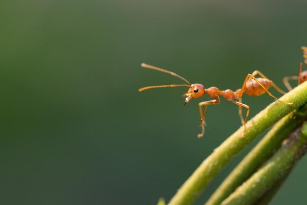 Azione della formica che sta sul fondo verde della sfuocatura