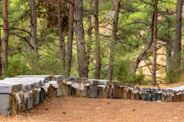 Concetto di apicoltura. alveari colorati e api volanti in apiario vicino alla pineta