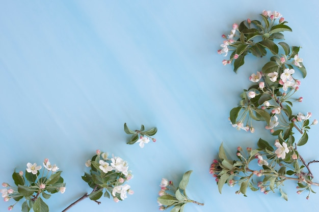 Il melo fiorisce su un fondo blu-chiaro, spazio della copia