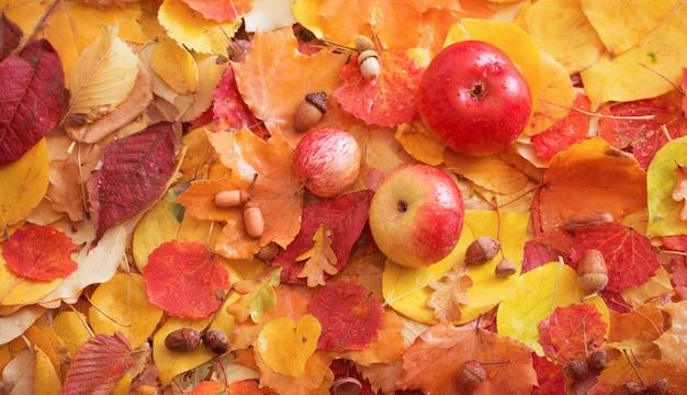 Mele e foglie di autunno con gocce di pioggia