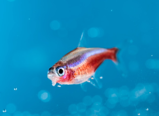 Primo piano di pesci d'acquario