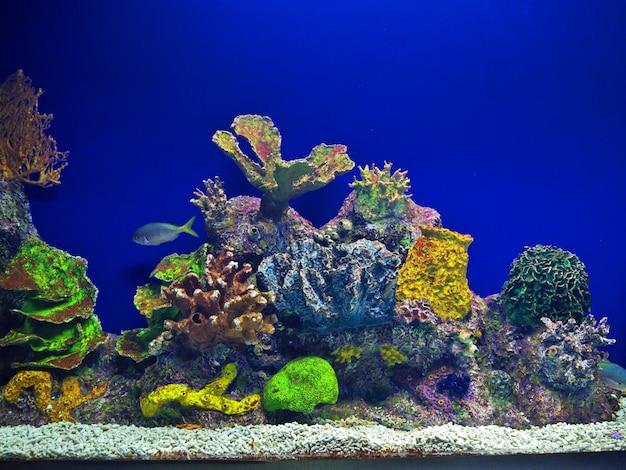 Acquario con pesci tropicali e coralli