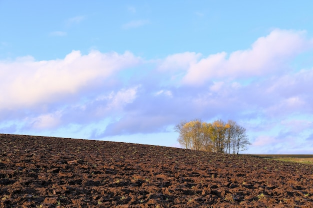 Terra coltivabile, alberi con foglie gialle e un cielo con nuvole viola.
