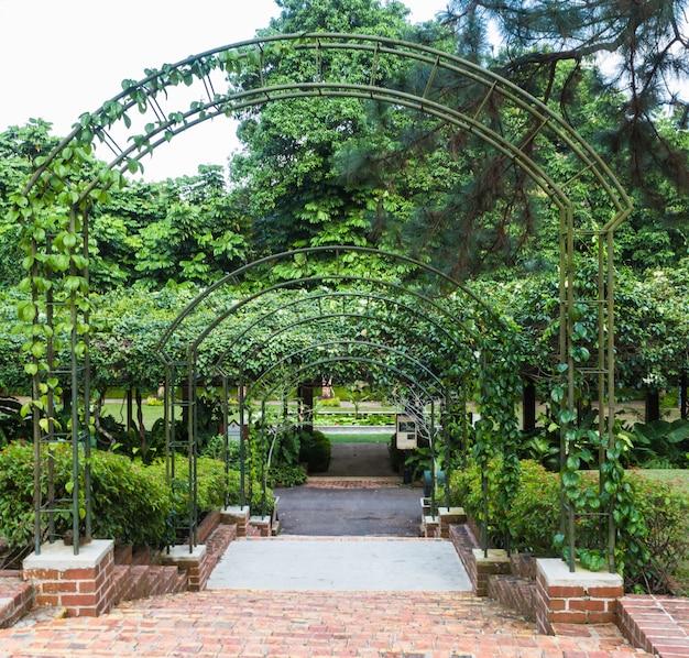 Archi con le piante