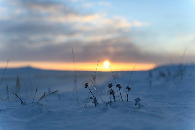 Paesaggio artico in inverno. erba con ghiaccio e neve nella tundra. tramonto.