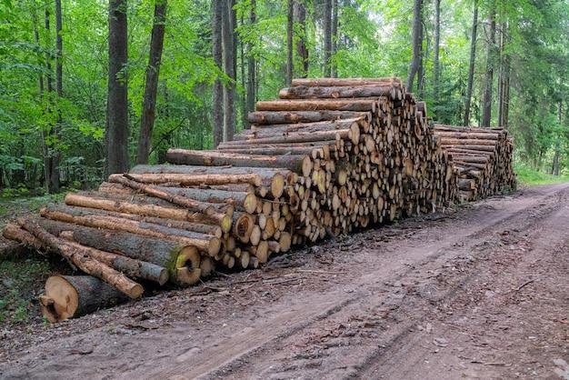 Area di deforestazione illegale di vegetazione nella foresta, catasta di legna tagliata vicino alla foresta.