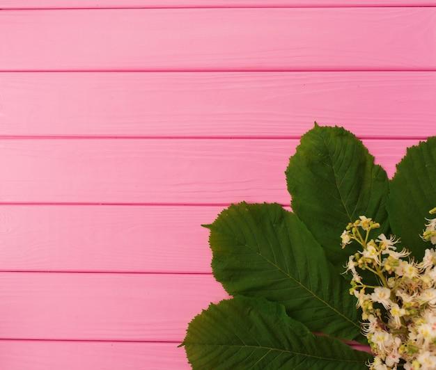 Zona per l'iscrizione. angoli fiori bordi cornici foglie di castagno
