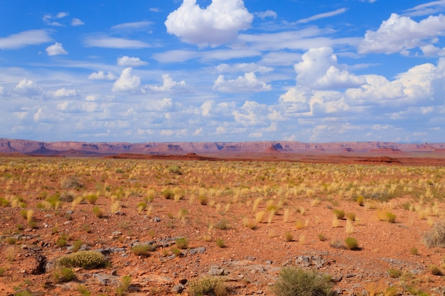 Panorama del deserto dell'arizona. cespuglio giallo e cielo blu con montagne rosse sullo sfondo. paesaggio usa