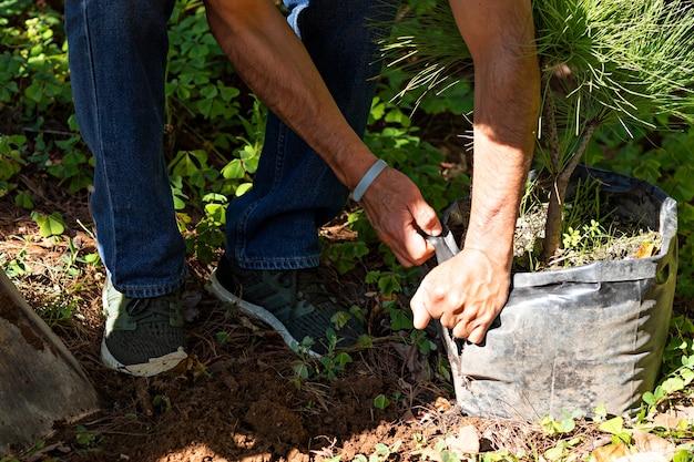 Le braccia di un uomo che apre una borsa nera per piantare un albero che è dentro in una giornata di sole nel mezzo della foresta
