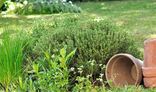 Erbe aromatiche con vasi in giardino