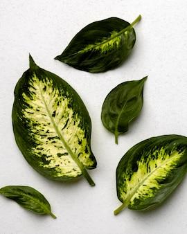 Disposizione delle foglie verdi su bianco