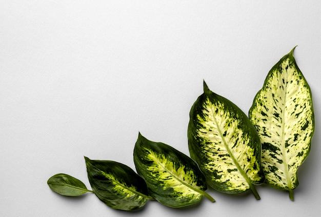 Disposizione delle foglie verdi con copia spazio