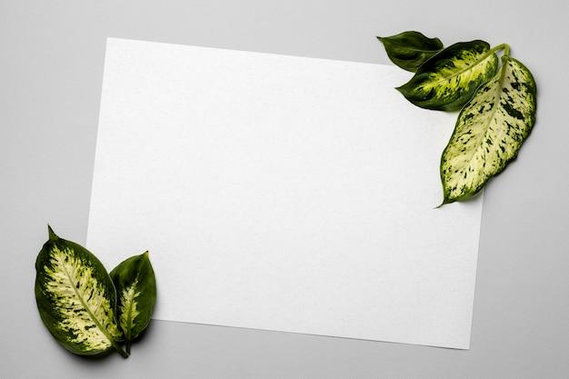 Disposizione delle foglie verdi con scheda vuota