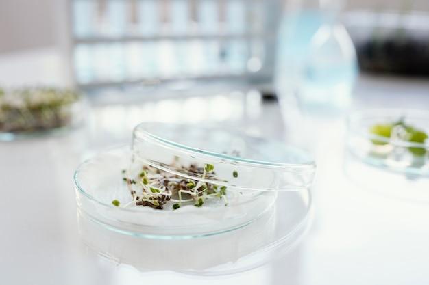 Disposizione con piante in capsule di petri
