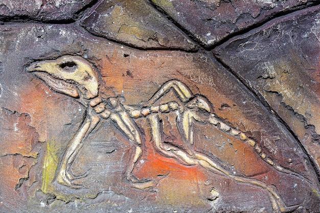 Artificiale di antichi organismi fossili sul muro di pietra