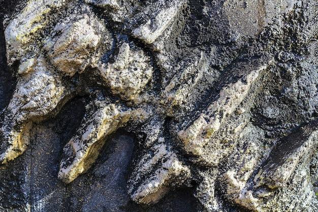 Artificiale di fossili antichi su muro di pietra del museo paleantologico per bambini.