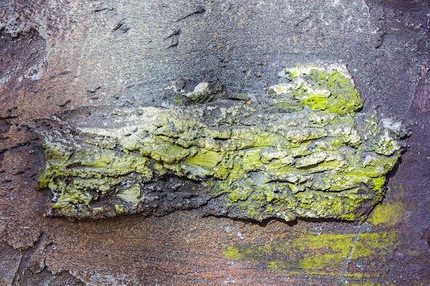 Artificiale di antico fossile su muro di pietra