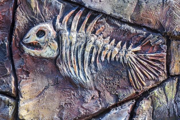 Copia artificiale di antichi pesci fossili sul muro di pietra