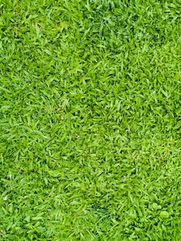 Struttura del prato inglese di erba artificiale.