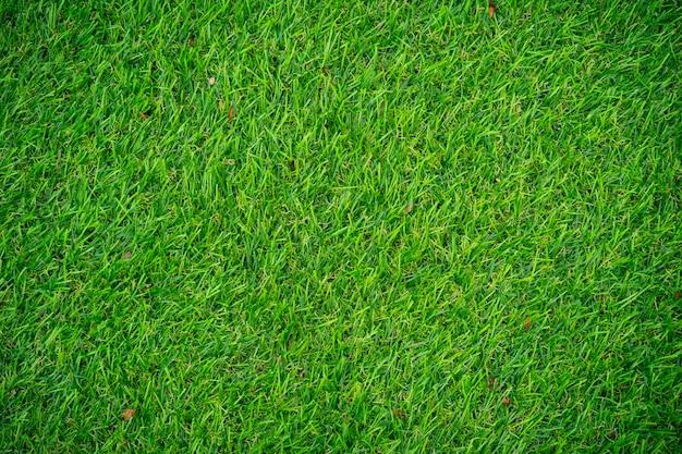 Trama di erba artificiale.