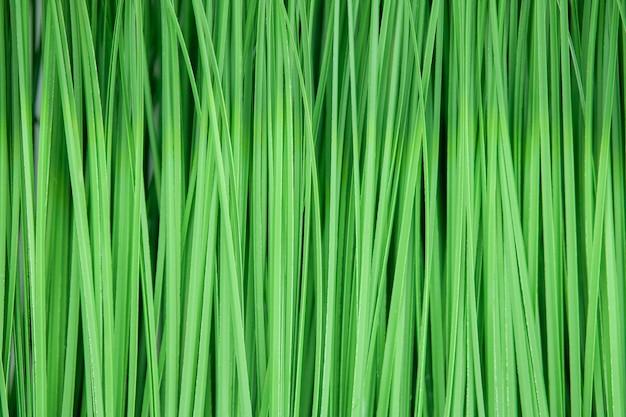 Erba verde artificiale come struttura e fondo.