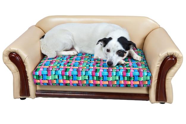 Letto in pelle artificiale per cani, isolato su sfondo bianco, include il tracciato di ritaglio.