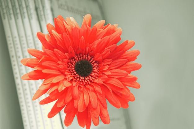 Fiore artificiale della gerbera rossa sulla parete della mensola del libro con i libri