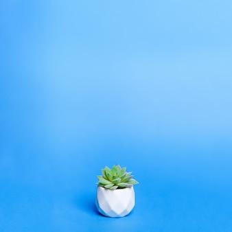 Pianta d'appartamento succulenta artificiale in vaso