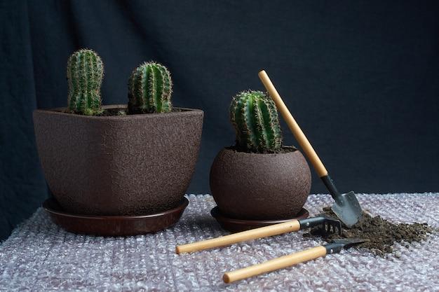 Pianta succulenta artificiale in vaso di ceramica sul bancone con attrezzi da giardino accanto al muro grigio