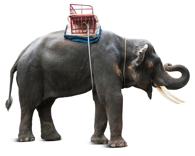 Elefante asiatico per il viaggio turistico naturale della thailandia isolato su sfondo bianco con percorso di ritaglio
