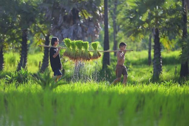 Coltivatore asiatico che sopporta le piantine di riso sul retro prima che crescano nella risaia