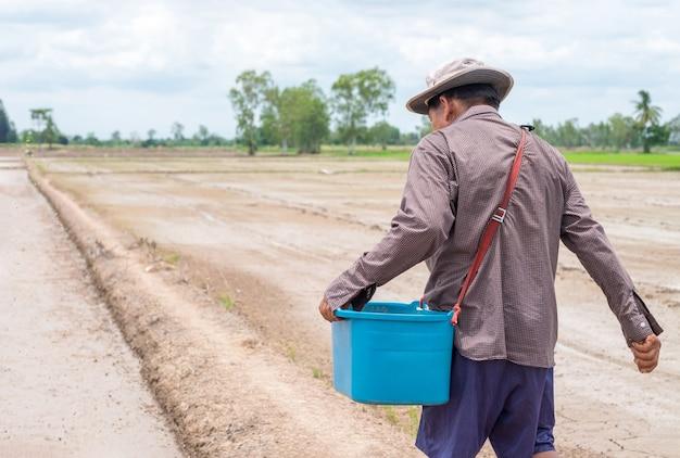 Uomo contadino asiatico sta lanciando la risaia piantine in un campo di riso.