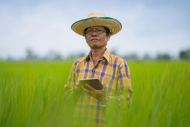 Coltivatore asiatico che utilizza compressa digitale in un giacimento verde del riso, concetto astuto di agricoltura di tecnologia