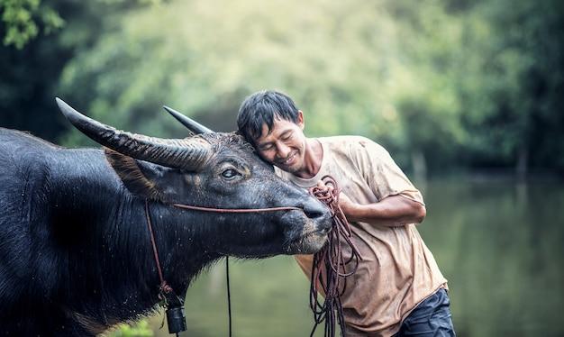 Agricoltore asiatico e bufalo d'acqua in fattoria