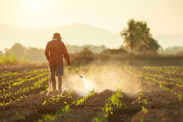 Coltivatore asiatico che lavora nel campo e che spruzza prodotto chimico